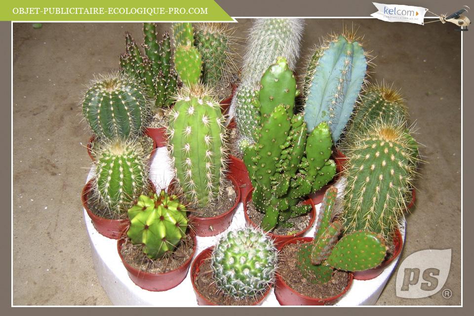 cactus plante ou arbre. Black Bedroom Furniture Sets. Home Design Ideas