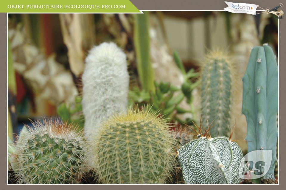 cactus objets publicitaires cadeau entreprise objets personnalis e by kelcom des. Black Bedroom Furniture Sets. Home Design Ideas
