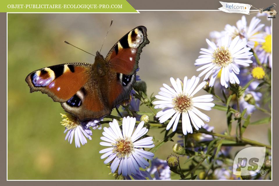 Fleurs papillons objets publicitaires cadeau - Image papillon et fleur ...