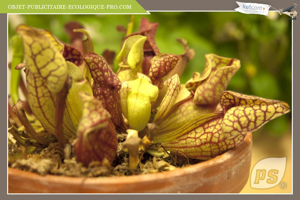 plante carnivore synonyme