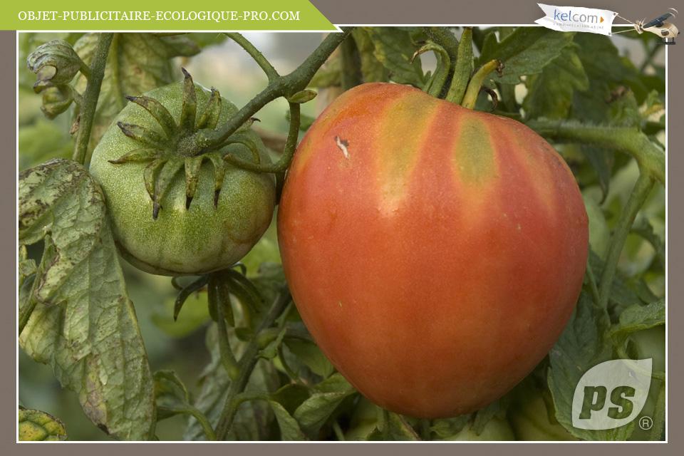 Tomate coeur de boeuf objets publicitaires cadeau - Planter des tomates coeur de boeuf ...
