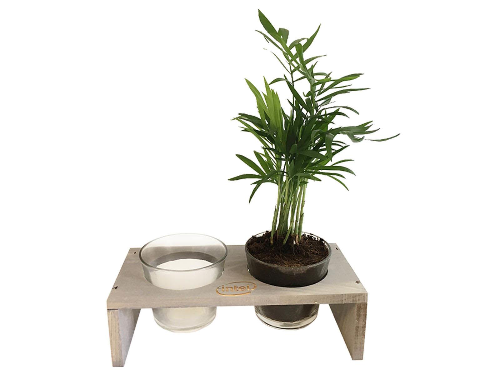Chardon double pot verre et bois Écologique publicitaire