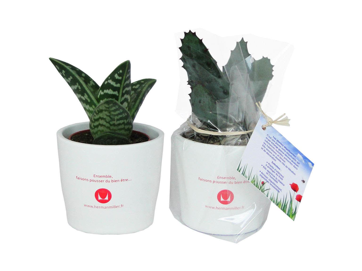 mini plante d polluante c ramique objet publicitaire. Black Bedroom Furniture Sets. Home Design Ideas
