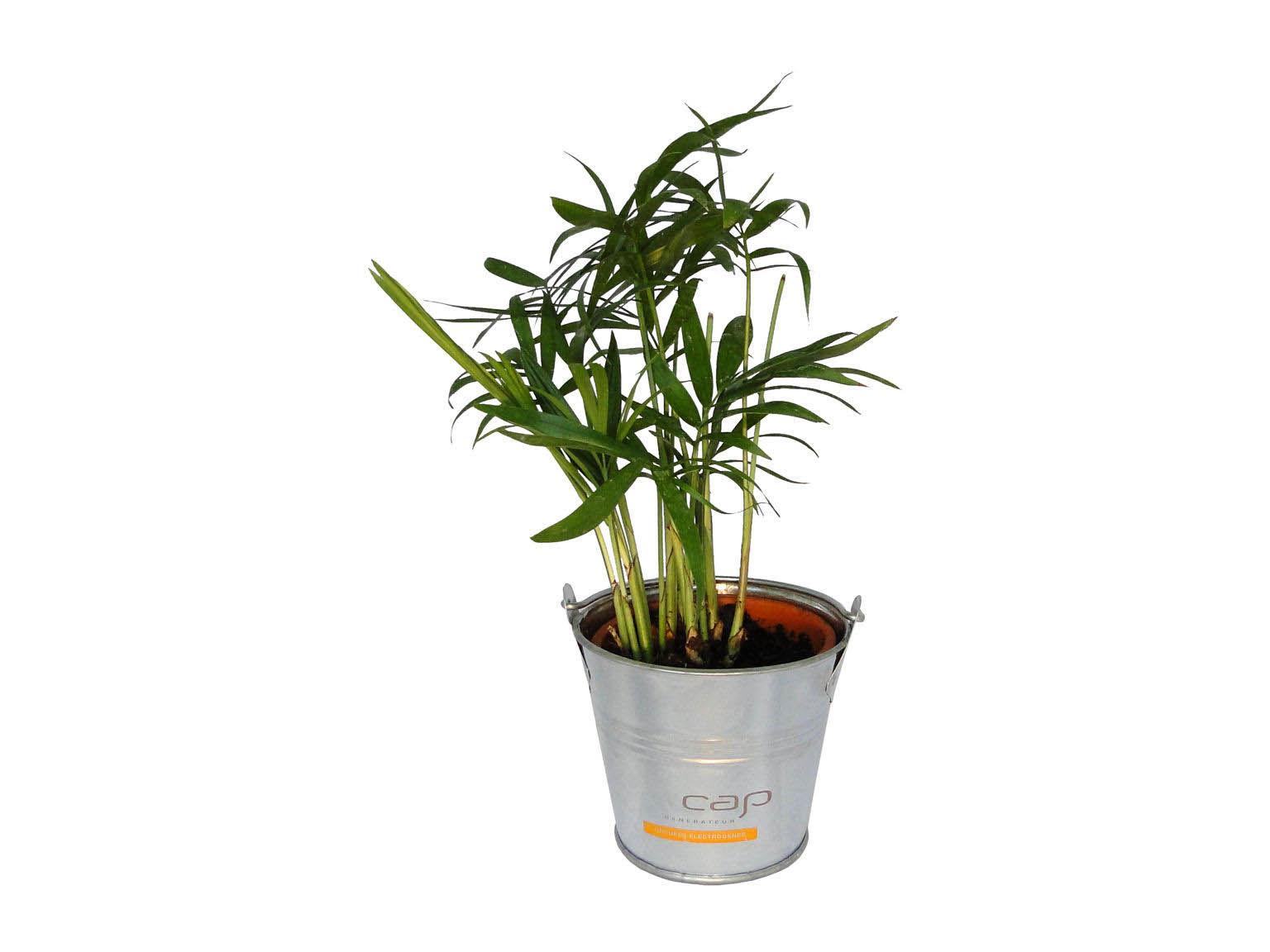 mini plante d polluante en pot zinc objet publicitaire. Black Bedroom Furniture Sets. Home Design Ideas