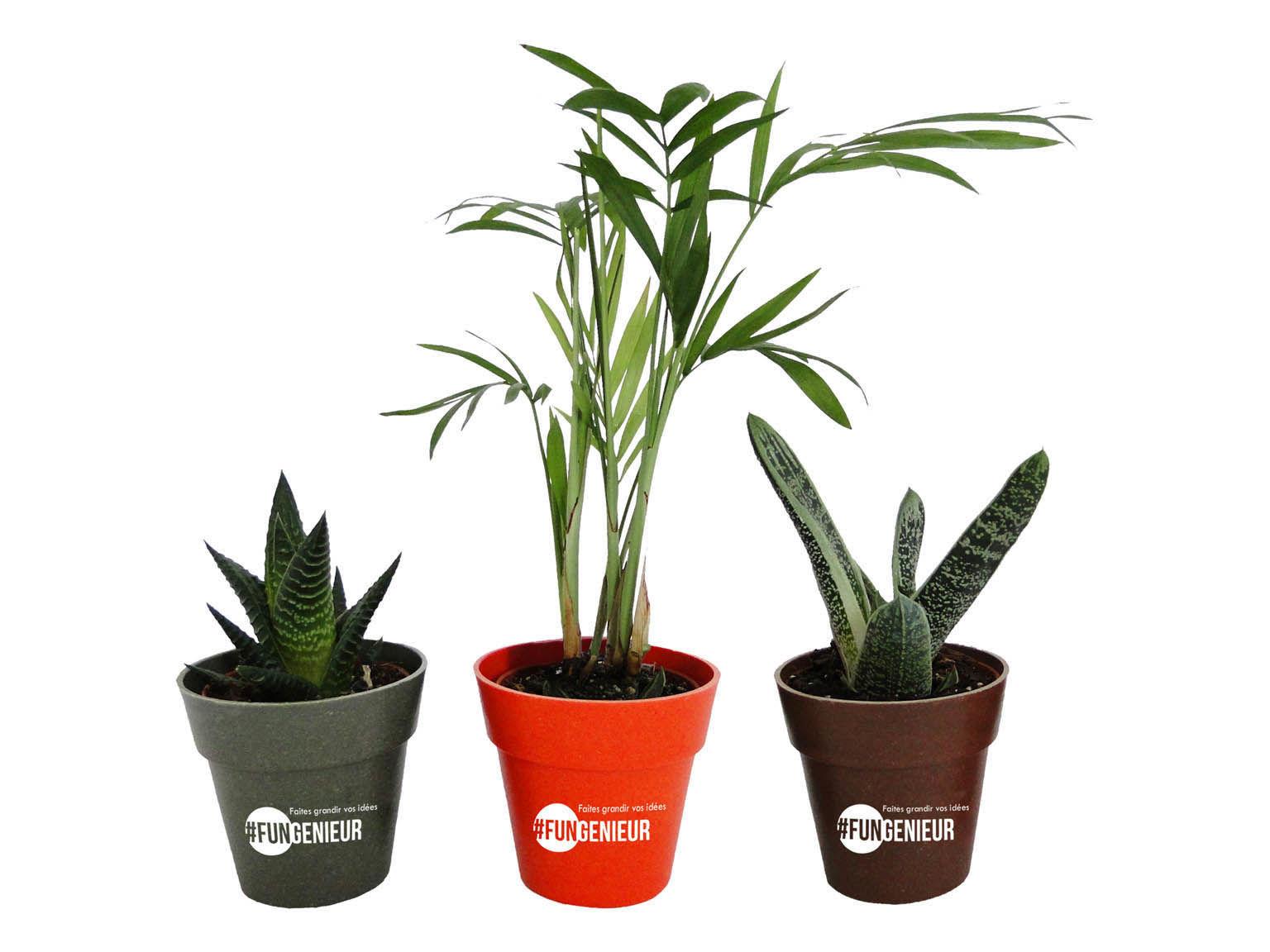 plante d co colo objet publicitaire cologique plantes pr tes offrir id e cadeau. Black Bedroom Furniture Sets. Home Design Ideas