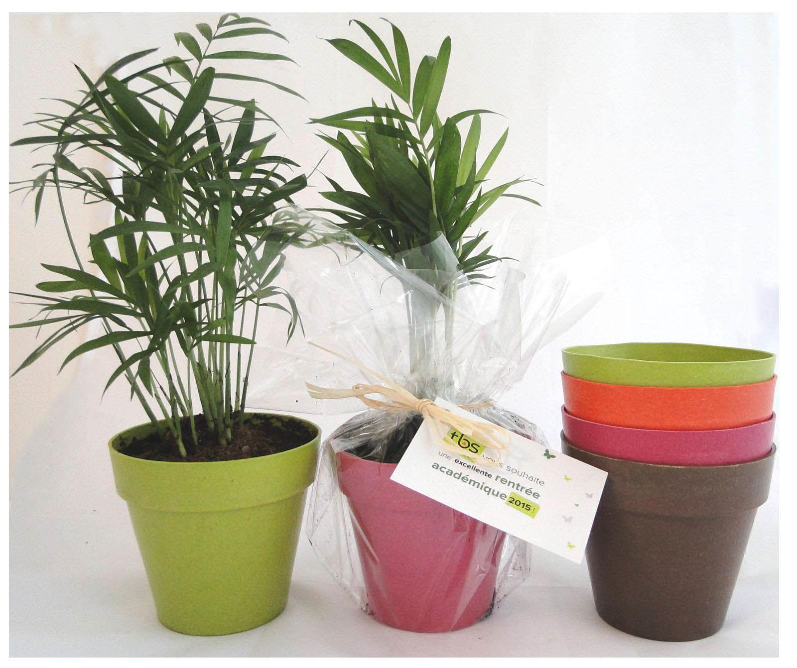 plante d co en pot ecolo objet publicitaire cologique. Black Bedroom Furniture Sets. Home Design Ideas