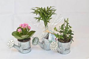 arrosoir en zinc avec mini plante fleurie objet. Black Bedroom Furniture Sets. Home Design Ideas
