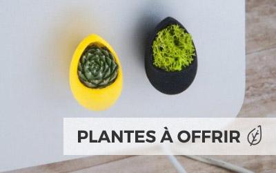 plantes pr tes offrir id e cadeau cologique kelcom. Black Bedroom Furniture Sets. Home Design Ideas